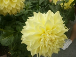 big yellow flower