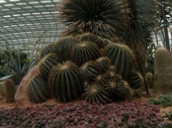 flower dome 20