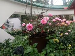 flower dome 5