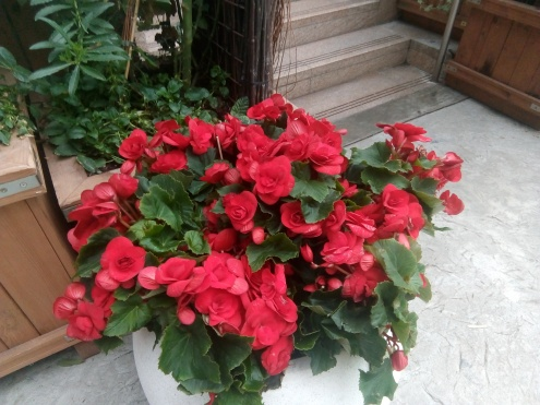 red flowers singapore